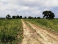 ideal-10000-m2-banana-field-for-sale-in-alanya-cenger-district-small-5