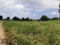 ideal-10000-m2-banana-field-for-sale-in-alanya-cenger-district-small-0