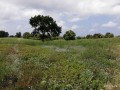 ideal-10000-m2-banana-field-for-sale-in-alanya-cenger-district-small-7