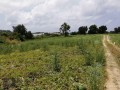ideal-10000-m2-banana-field-for-sale-in-alanya-cenger-district-small-6