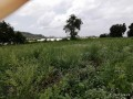 ideal-10000-m2-banana-field-for-sale-in-alanya-cenger-district-small-3