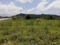 ideal-10000-m2-banana-field-for-sale-in-alanya-cenger-district-small-1