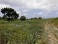 ideal-10000-m2-banana-field-for-sale-in-alanya-cenger-district-small-4