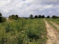 ideal-10000-m2-banana-field-for-sale-in-alanya-cenger-district-small-2