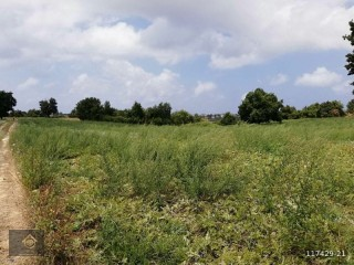 IDEAL 10.000 M2 BANANA FIELD FOR SALE IN ALANYA ÇENGER DISTRICT