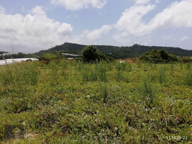 ideal-10000-m2-banana-field-for-sale-in-alanya-cenger-district-big-1