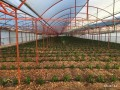 kumluca-mavikent-project-for-sale-last-system-greenhouse-small-8