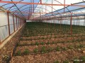 kumluca-mavikent-project-for-sale-last-system-greenhouse-small-6