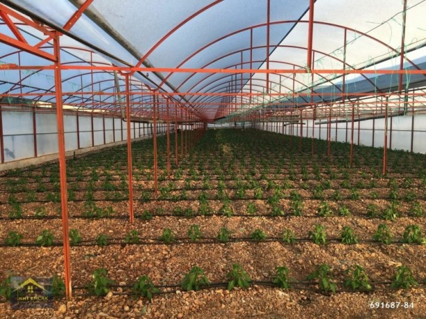kumluca-mavikent-project-for-sale-last-system-greenhouse-big-8
