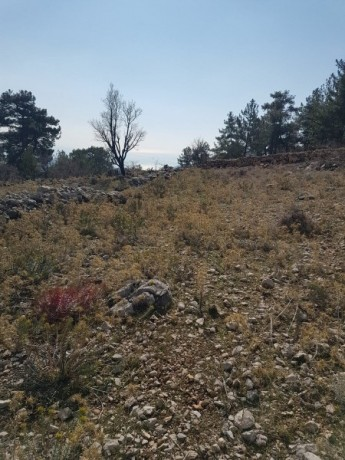 cheap-1000m2-cottage-house-land-for-sale-in-kemer-beycik-high-mediterranean-mountain-big-10
