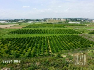70 ACRES LAND FOR SALE NEAR NEW TOURISM ROAD IN AKSU MANDIRS