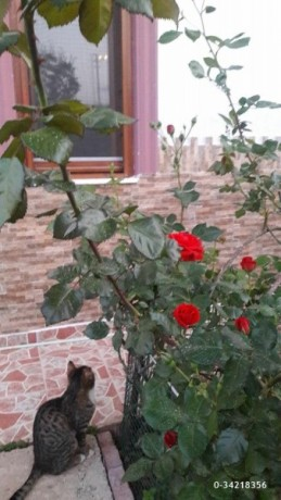 detached-house-for-sale-in-finike-antalya-big-11