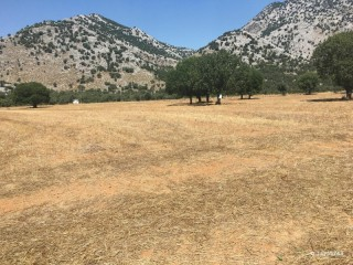 DUMPING PRICE LAND FOR SALE DOSEMEALTI ANTALYA CHEAP, APARTMENT BLOCKS BUILD