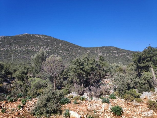 53000-m2-kas-land-incredible-opportunity-for-investment-2-km-to-the-sea-big-3
