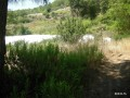 land-for-sale-in-karaoz-kumluca-real-estate-small-3