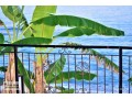9000-m2-alanya-for-sale-sea-views-suitable-for-field-bananas-and-avocados-small-1