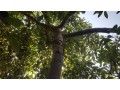 1350-m2-avocado-garden-in-alanya-kestel-for-sale-turkey-small-4