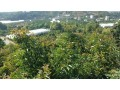 1350-m2-avocado-garden-in-alanya-kestel-for-sale-turkey-small-2
