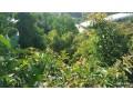 1350-m2-avocado-garden-in-alanya-kestel-for-sale-turkey-small-0