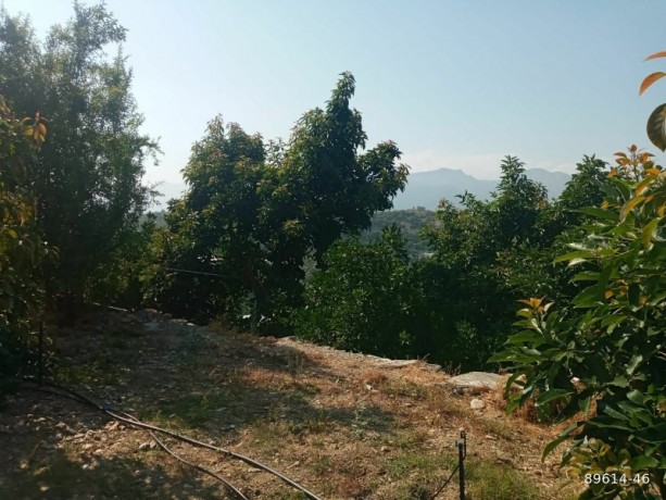 1350-m2-avocado-garden-in-alanya-kestel-for-sale-turkey-big-6