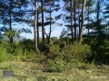 3940-m2-land-for-sale-in-antalya-olympos-for-new-turizm-facility-small-6