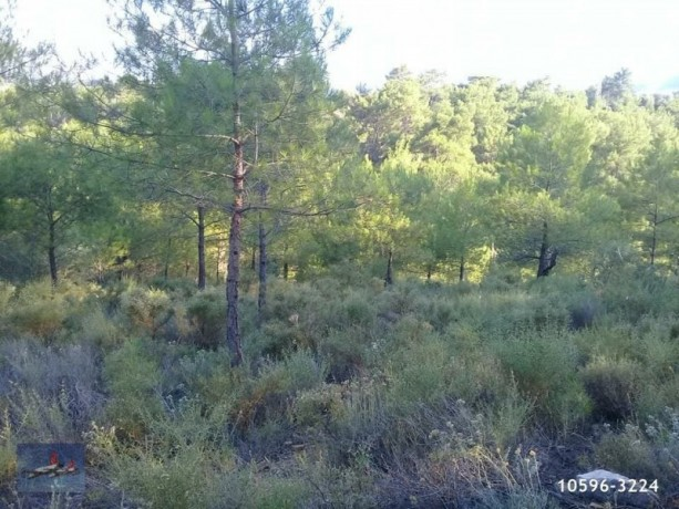 3940-m2-land-for-sale-in-antalya-olympos-for-new-turizm-facility-big-9