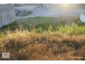 530-m2-villa-construction-land-for-sale-in-alanya-options-small-4