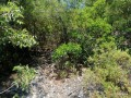 land-for-sale-between-beautiful-mountains-in-alanya-small-0