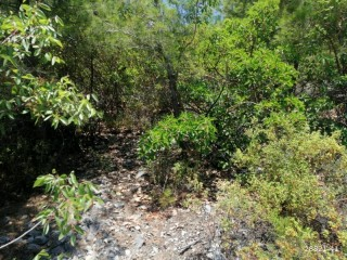 Land for sale between beautiful mountains in Alanya