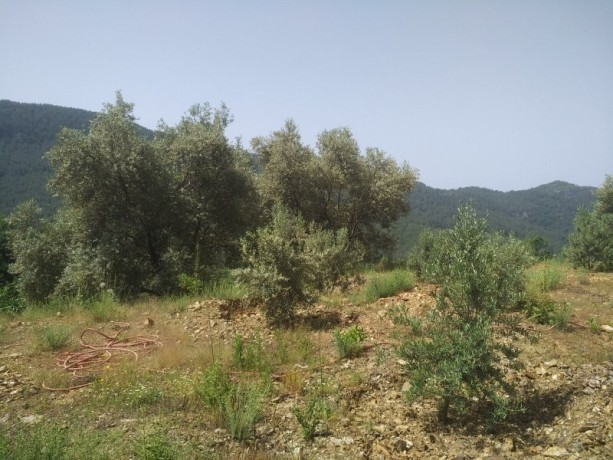 560-m2-new-houseland-for-sale-between-mountains-tepe-alanya-big-4