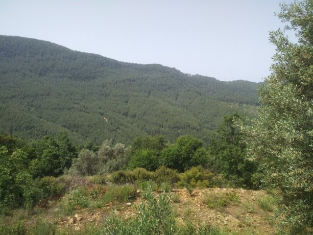 560-m2-new-houseland-for-sale-between-mountains-tepe-alanya-big-7