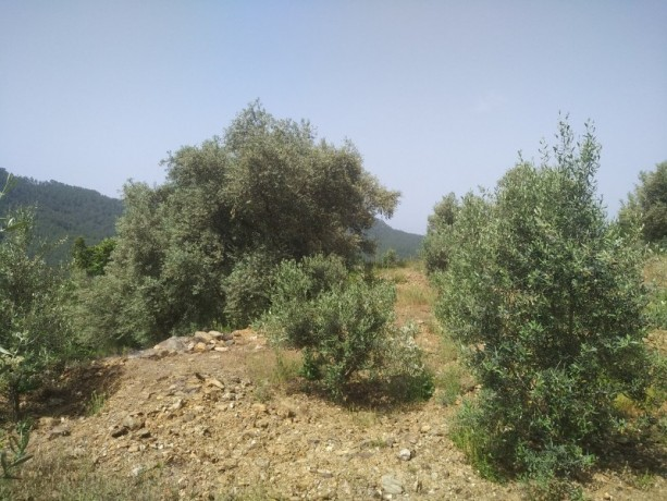 560-m2-new-houseland-for-sale-between-mountains-tepe-alanya-big-1