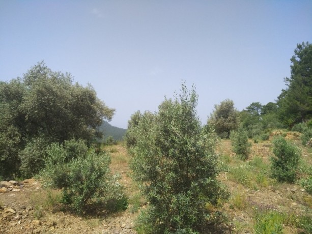 560-m2-new-houseland-for-sale-between-mountains-tepe-alanya-big-2