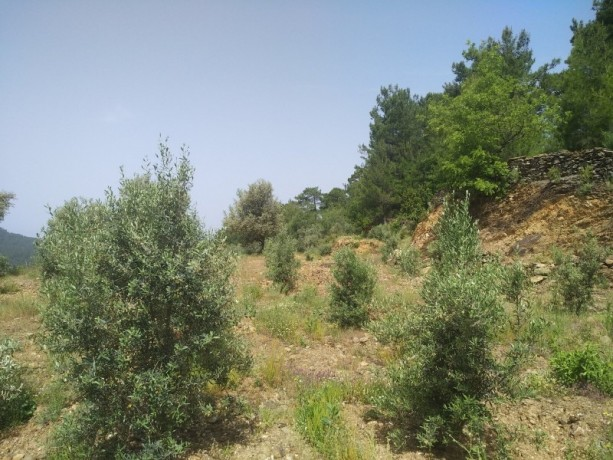 560-m2-new-houseland-for-sale-between-mountains-tepe-alanya-big-14