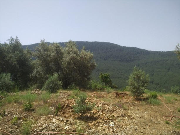560-m2-new-houseland-for-sale-between-mountains-tepe-alanya-big-5