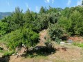 alanya-bektas-uncompleted-house-in-1059-m2-land-for-sale-small-7