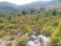 1500-m2-land-for-sale-with-sea-view-between-mountains-in-alanya-small-1