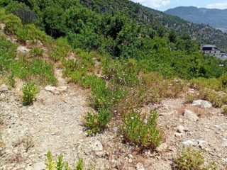 Alanya Tepe Sea View Land For Sale 1001 m2 villa zoned