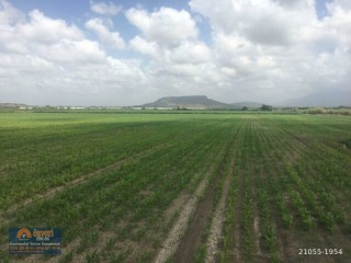 GREENHOUSE LAND FOR SALE IN ANTALYA/SERIK/ANTALYA