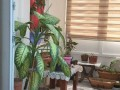 palm-3-1-apartment-for-sale-konyaalti-beach-small-10