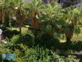 2-1-rental-apartment-with-sea-floor-in-alanya-tosmur-small-7