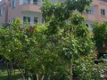 at-the-antalya-olympos-historic-beach-apartment-hotel-for-sale-small-14