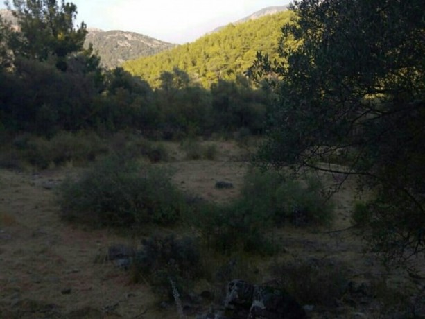 13300-m2-with-mustakil-deed-in-olympos-center-big-0