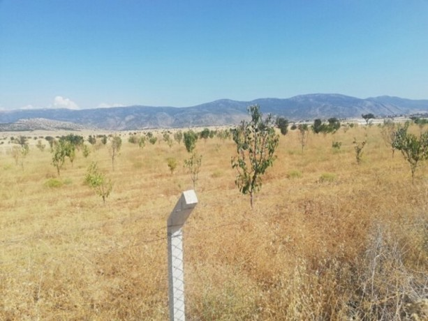 9200-m2-affordable-unmissable-land-75x75-vineyard-house-licensed-big-0