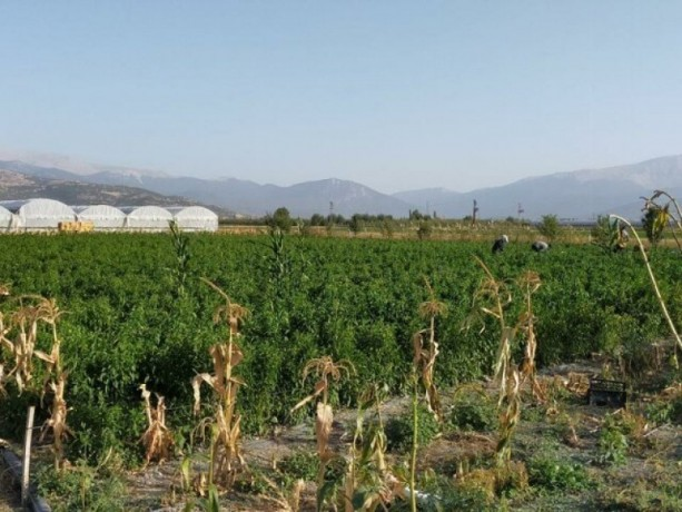 greenhouse-farm-for-sale-in-elmali-duden-village-9075-m2-big-3