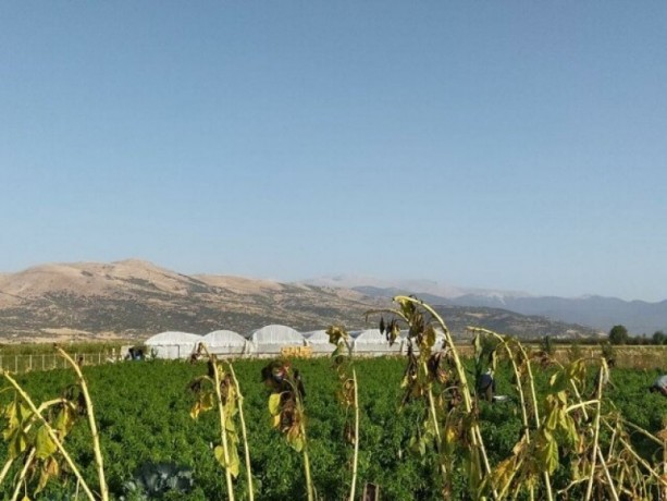 greenhouse-farm-for-sale-in-elmali-duden-village-9075-m2-big-6