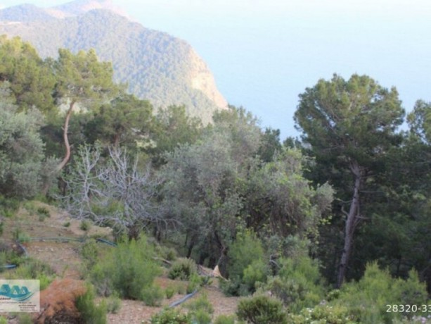 land-and-house-with-sea-view-for-sale-in-alanya-yesiloz-big-5