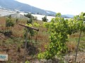 gazipasa-for-sale-field-7-acres-cobanlar-farm-small-0