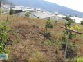 gazipasa-for-sale-field-7-acres-cobanlar-farm-small-3