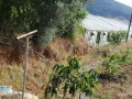 gazipasa-for-sale-field-7-acres-cobanlar-farm-small-7
